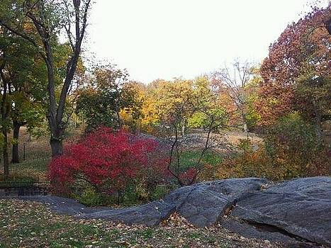 Fall 2013 in Central Park N.Y by Theresa Crawford