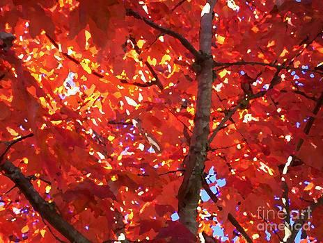 Fall Ablaze #2 by Doreen Lambert