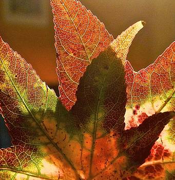 Fall Abstract by Wendell Lowe