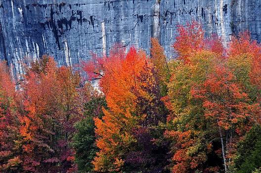 Marty Koch - Fall At Steele Creek