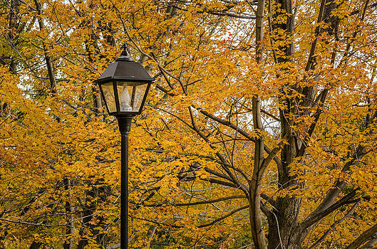 Fall At The Park by Celso Bressan
