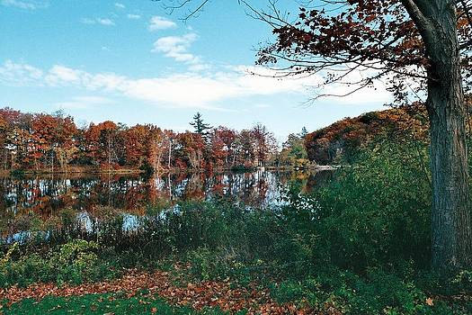 Fall at the pond by Don Pettengill
