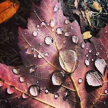 #fall #autumn #seasons #colors #leaves by Megan Rudman