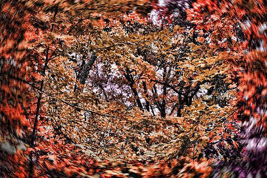 Cindy Boyd - Fall Backyard Color