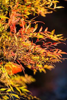 Fall Berries by Mike Lee