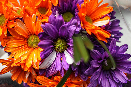 Fall Bloom by Brandon Hussey