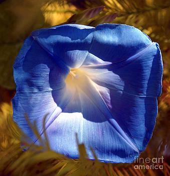 Fall Blues by Kim Pate