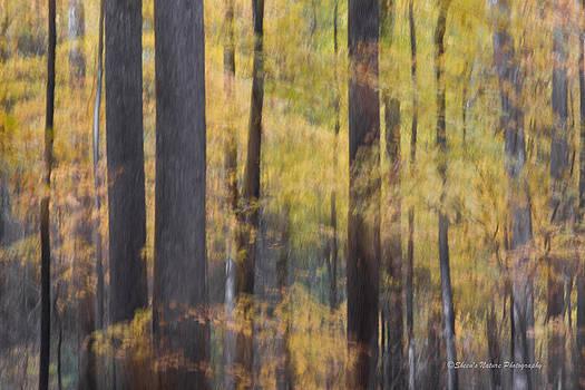 Fall Breeze by Sheen Watkins