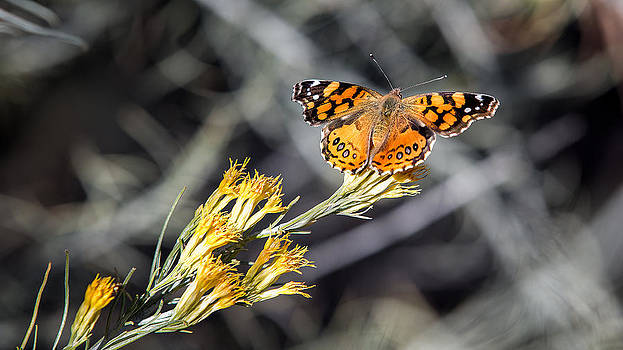 Fall Butterfly by Larry Pollock
