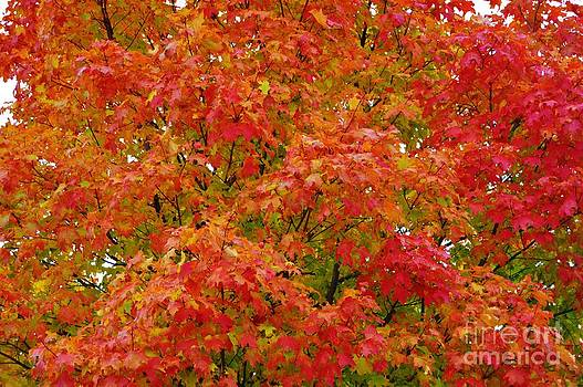 Fall Color Explosion by Brigitte Emme
