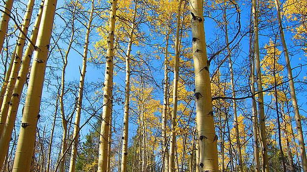 Fall color in blue sky by Prasida Yerra