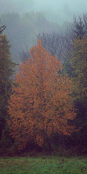 Fall Colors by Adam Caron