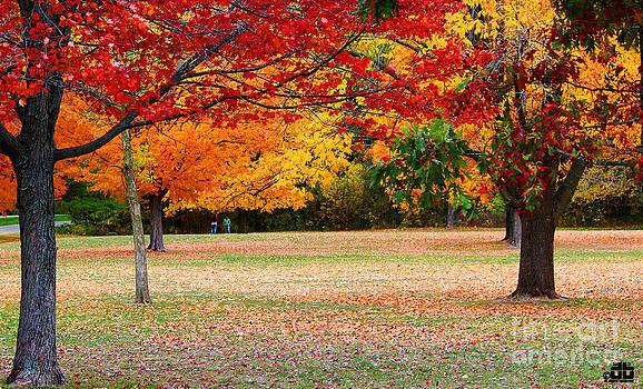 Fall Colors - Devils Lake by Dheeraj B