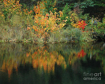 Fall Colors I by Robert  Suggs