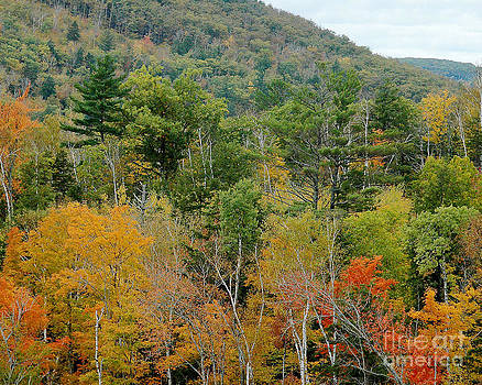 Fall Colors II by Robert  Suggs