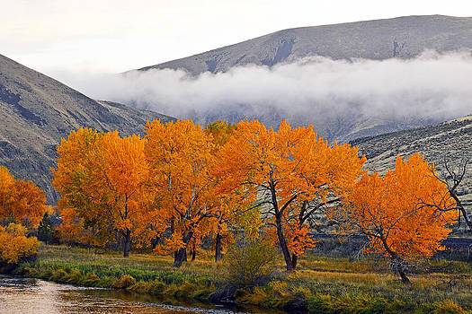 Fall Colors in Canyon by Duane King