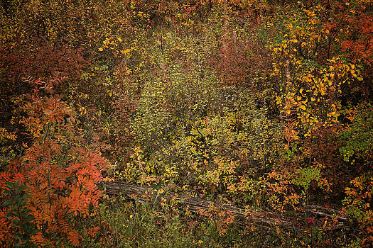 Roger Mullenhour - Fall Colors in Yellowstone