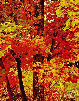 Jeff McJunkin - Fall Colors IV