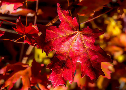 Fall Colors by Jim Lucas