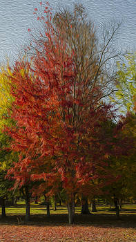 Fall Colors by Neil Todd