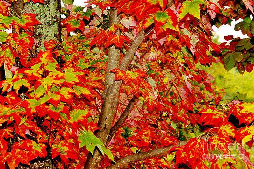 Jeff McJunkin - Fall Colors V