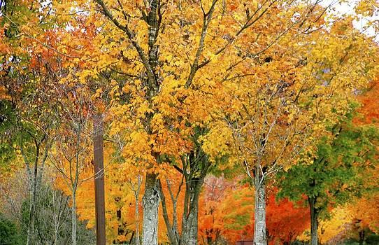 Fall Fall Fall by Bess Yearsley