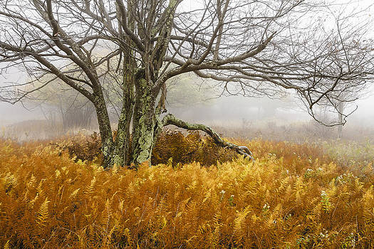 Fall Ferns and Fog by Bill Swindaman