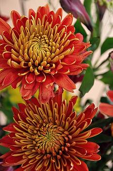 Fall Flowers by Lynn Jordan