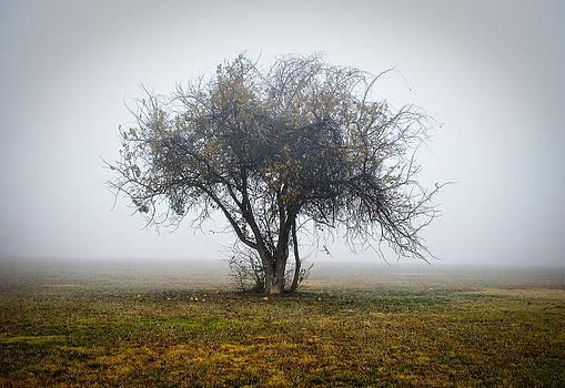 Fall Fog Tree by Ken Rutledge