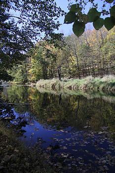 Adrienne Franklin - Fall Foliage