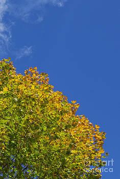 Jonathan Welch - Fall Foliage