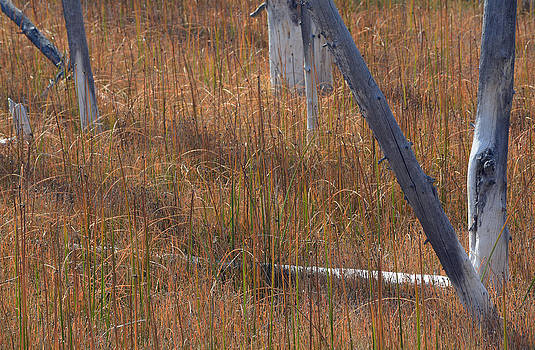 Autumn Grass Victory Signs by Bruce Gourley