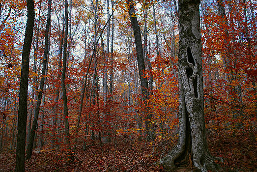 Fall Hollow by Jeff Rose