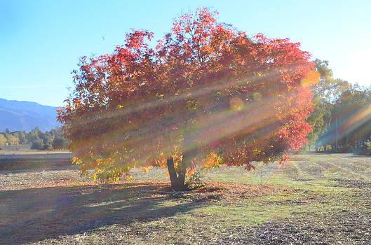 Fall in California by Brooke Clark