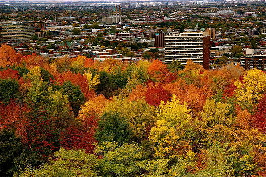 Fall in colors 1 by Jocelyne Choquette