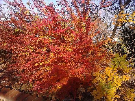Fall in Elmont N.Y by Theresa Crawford