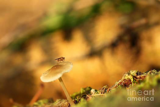 LHJB Photography - Fall in the forest - fly on a mushroom