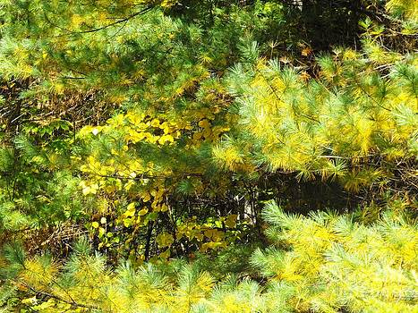 Fall In Yellow by Lisa Gifford
