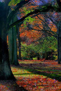 Fall is Coming by Bruce Nutting