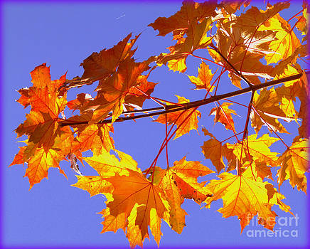Fall is in the Air by Lisa Conner