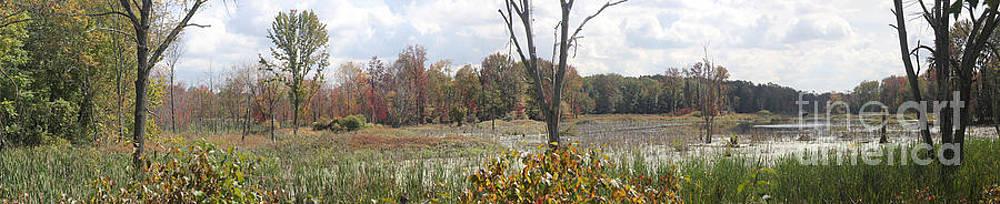 Adrienne Franklin - Fall Landscape
