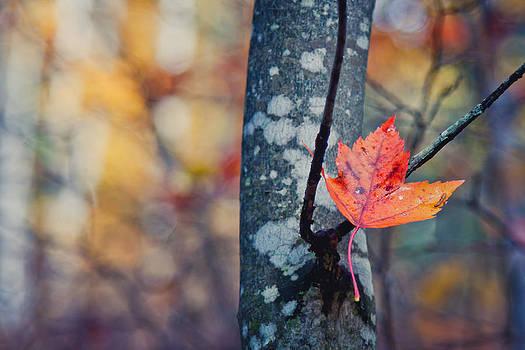Fall Leaf by India Blue photos