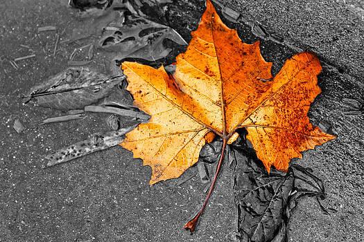 Fall Leaf by Nichole Carpenter