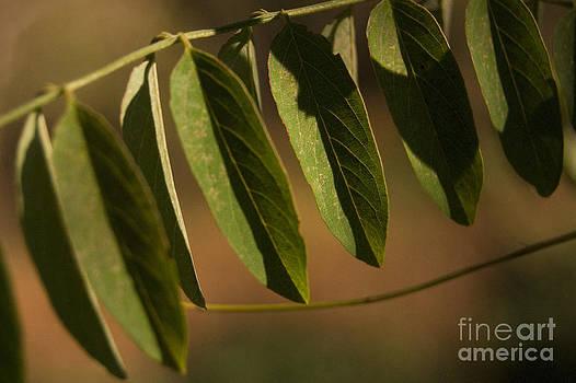 Fall leaves by Cynthia Holling-Morris