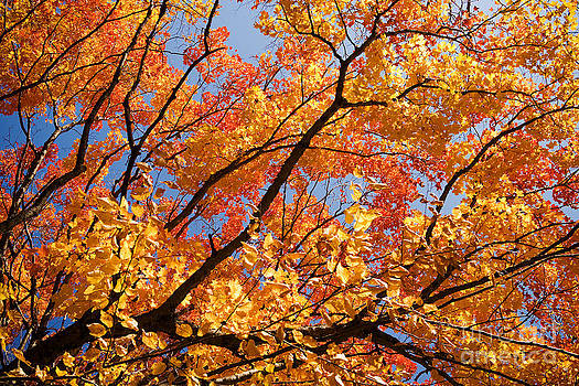 Fall Leaves by Dolly Genannt