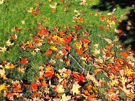 Fall Leaves by Lisa Gifford