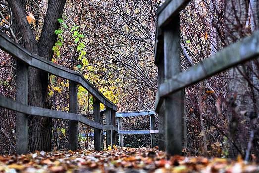 Fall Leaves on Boardwalk by Don Mann