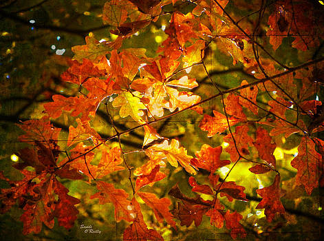 Fall Lights The Leaves by Sandi OReilly