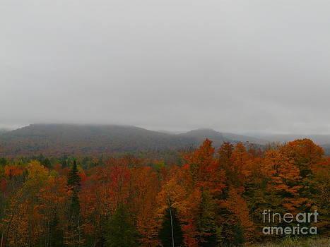Fall Lineup on a Misty Day by Avis  Noelle