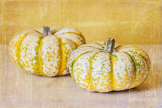 Fall Pumpkins by Terry Ellis